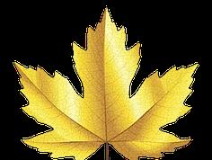 Golden Leaf Capital Group